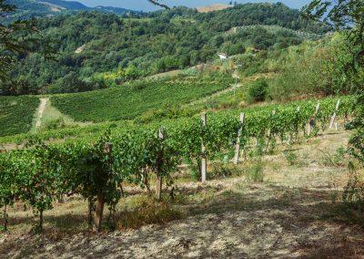 vino-shop-online